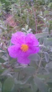 florjarablanca